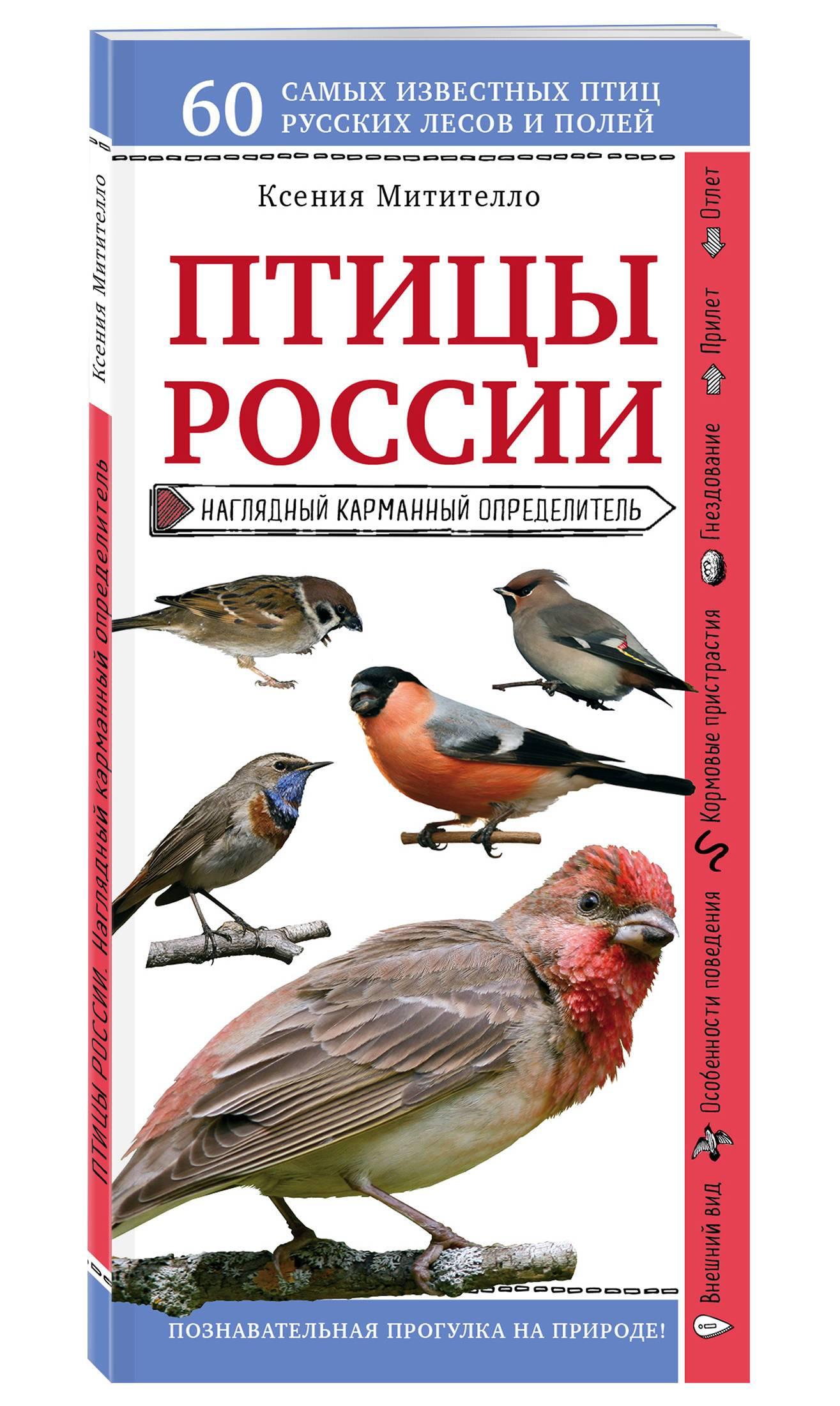 Справочник в картинках птицы